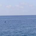 maldives 045.jpg