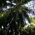 maldives 080.jpg